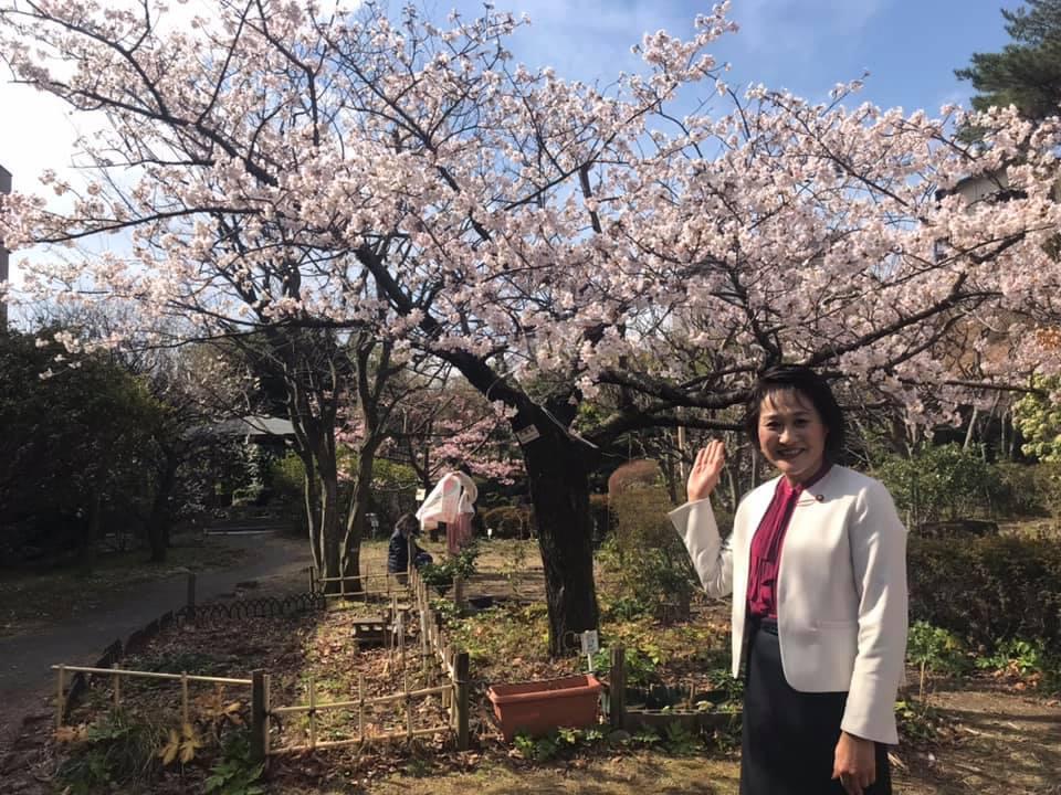 なんと桜が‼︎